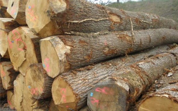 Southern Yellow Pine Lumber And Log Suppliers