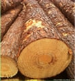 Southen-Yellow-Pine-Suppliers