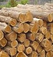 Teak-Wood-Suppliers